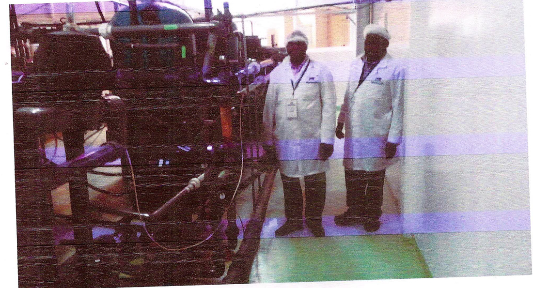 Service Team Inspecting a Plant in Pharmaceutical Industry